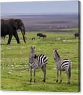 Africa Tanzania African Elephant Canvas Print