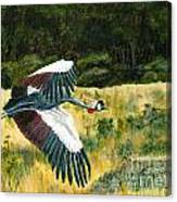 African Crowned Crane Painting Canvas Print