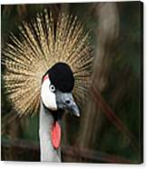 African Crowned Crane 1 Canvas Print