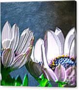African Daisy Detail Canvas Print