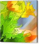 African Daisy I - Digital Paint Canvas Print