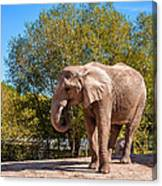 African Elephant 2 Canvas Print