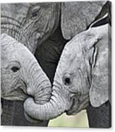 African Elephant Calves Loxodonta Canvas Print