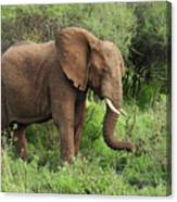 African Elephant Grazing Serengeti Canvas Print