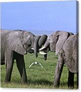 African Elephant Greeting Endangered Species Tanzania Canvas Print