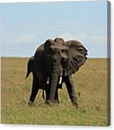 African Elephant Masai Mara Kenya Canvas Print