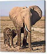African Elephant Mother And Calf Canvas Print