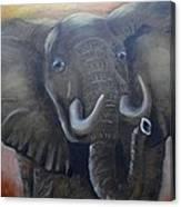 African Elephant Canvas Print