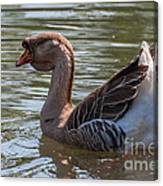 African Goose Canvas Print