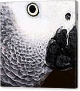 African Gray Parrot Art - Seeing Is Believing Canvas Print