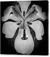 African Iris Bw Canvas Print