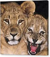 African Lion Cubs One Aint Happy Wldlife Rescue Canvas Print