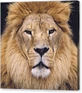 African Lion Male Portrait Canvas Print