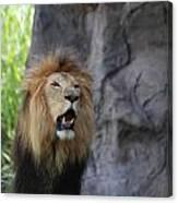 African Lion Roar Canvas Print