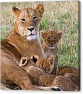 African Lioness And Young Cubs Canvas Print