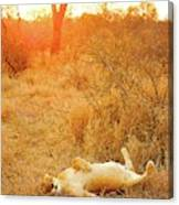 African Mammals Canvas Print