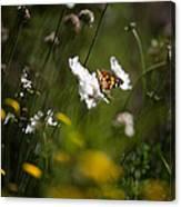 African Monarch Butterfly In Garden Canvas Print