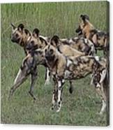 African Painted Hunting Dogs Canvas Print