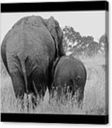 African Safari Elephants 3 Canvas Print