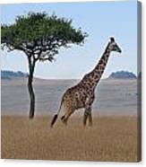 African Safari Giraffes 2 Canvas Print