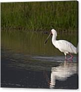African Spoonbill   #0202 Canvas Print