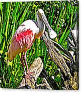 African Spoonbill In San Diego Zoo Safari Park In Escondido-california Canvas Print