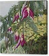 African Tulip Tree Canvas Print