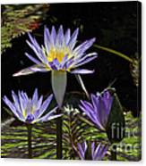 African Waterlily Dazzle -- Plus Dragonfly Canvas Print