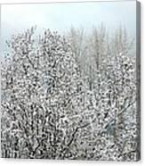 After A Light Snowfall Canvas Print