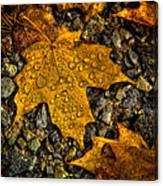 After An Autumn Rain Canvas Print