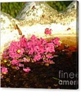 After Bloom Canvas Print