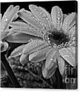 After The Rain Bw Canvas Print
