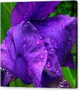After The Sunshower Canvas Print