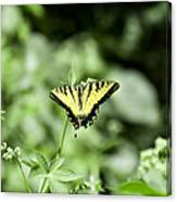Afternoon Butterfly Canvas Print
