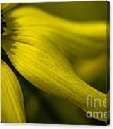 Afternoon Flower Canvas Print