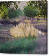 Afternoon  Grasses Canvas Print