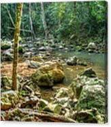 Afternoon In The Jungle Canvas Print