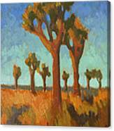 Afternoon Light At Joshua Tree Canvas Print