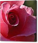 Afternoon Rose Canvas Print