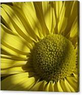 Afternoon Yellow Canvas Print