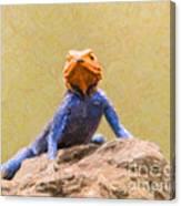 Agama Lizard On Rock Canvas Print