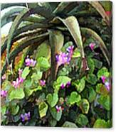 Agave And African Violets Canvas Print