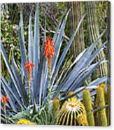 Agave And Cactus Canvas Print