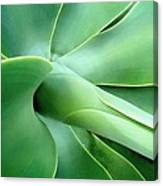 Agave Heart Canvas Print