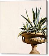 Agave In Pot Canvas Print