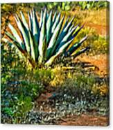 Agave In Secret Mountain Wilderness West Of Sedona Canvas Print