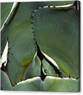 Agave Up Close Canvas Print