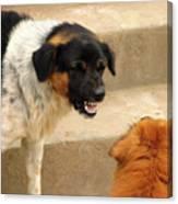 Aggressive Dogs Canvas Print