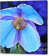 Aglow In Blue Wide View Canvas Print