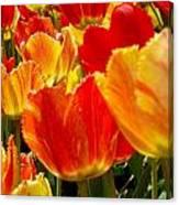 Agressive Tulips Canvas Print
